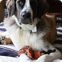 Adopt A Pet :: Woofus - Denver, CO