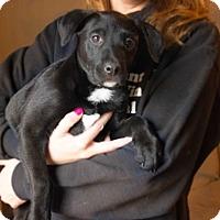 Adopt A Pet :: Patty - Franklin, VA