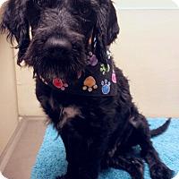 Adopt A Pet :: Petey - Sugarland, TX