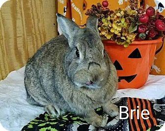 American Mix for adoption in Williston, Florida - Brie