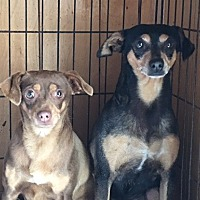 Adopt A Pet :: DOLLY & MOLLY - San Pablo, CA
