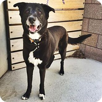 Mixed Breed (Large) Mix Dog for adoption in Denver, Colorado - Tipsy