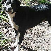 Adopt A Pet :: Tinker Bell - Conroe, TX