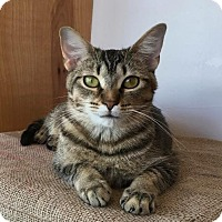 Adopt A Pet :: Raya - St. Louis, MO