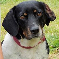 Adopt A Pet :: Fiji - Joplin, MO