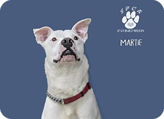Mixed Breed (Large) Mix Dog for adoption in Kalamazoo, Michigan - Martie