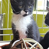 Adopt A Pet :: Phoebe - Nottingham, MD