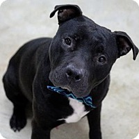 Adopt A Pet :: Turbo - Picayune, MS