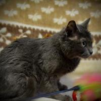 Adopt A Pet :: Elsie - North Battleford, SK