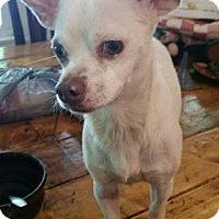 Adopt A Pet :: Roscoe - Rexford, NY