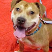 Adopt A Pet :: Copper - Twinsburg, OH