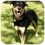 Photo 1 - Doberman Pinscher/Labrador Retriever Mix Dog for adoption in Mocksville, North Carolina - Juneau