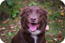 Labrador Retriever Mix Dog for adoption in Salem, Massachusetts - Bella
