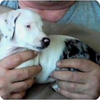 Adopt A Pet :: Bugs, Bunny & PEEPS - Duluth, GA