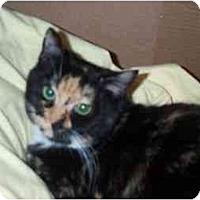 Adopt A Pet :: Honey - Jenkintown, PA