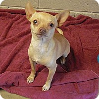 Adopt A Pet :: Marty - Wickenburg, AZ