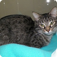 Adopt A Pet :: Madison - Dover, OH