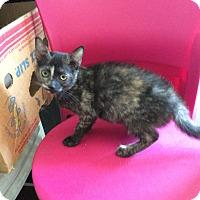 Adopt A Pet :: Teenie - Acme, PA