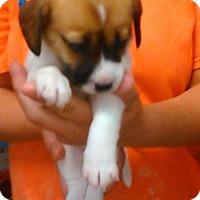 Adopt A Pet :: Sierra - Clarksville, TN