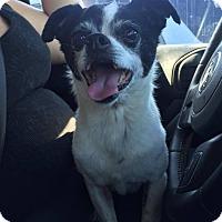Adopt A Pet :: Oreo - Poway, CA