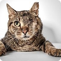 Adopt A Pet :: Tom - New York, NY