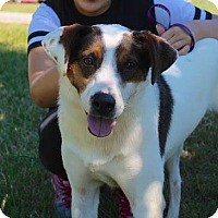 Adopt A Pet :: Michael - Dickson, TN