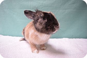 Other/Unknown Mix for adoption in Fountain Valley, California - Sunflower