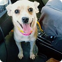 Adopt A Pet :: Mama - Las Vegas, NV