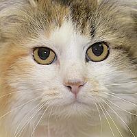 Adopt A Pet :: Mattie - Medina, OH