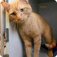 Adopt A Pet :: Jason - Oskaloosa, IA