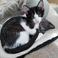 Adopt A Pet :: MooMoo - Lenhartsville, PA