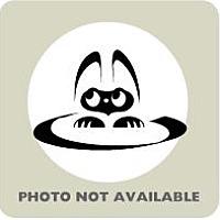 Adopt A Pet :: Anna - Gulfport, MS