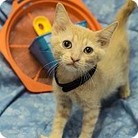 Adopt A Pet :: Chan - Addison, IL