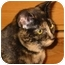 Photo 2 - Domestic Shorthair Cat for adoption in Port Republic, Maryland - Speckles