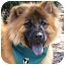Photo 1 - Chow Chow Dog for adoption in San Diego, California - Rufus