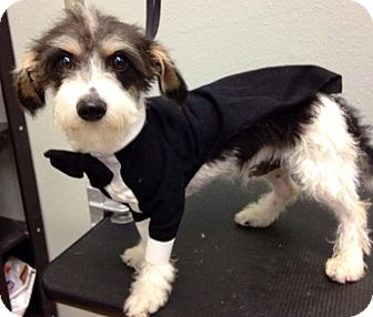 Terrier (Unknown Type, Small) Puppy for adoption in South Gate, California - Skits