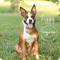 Adopt A Pet :: Ziggy - Topeka, KS