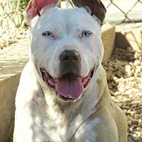 Adopt A Pet :: Gracie - West Babylon, NY