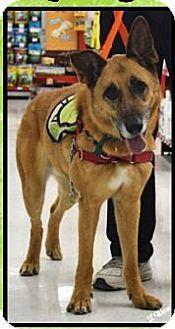 Belgian Malinois Mix Dog for adoption in Ogden, Utah - Wiley