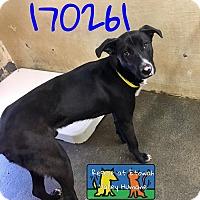Adopt A Pet :: Colt - Boston, MA