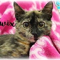 Adopt A Pet :: Twix - Wichita Falls, TX