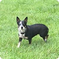 Adopt A Pet :: Mavis - Blountstown, FL