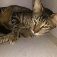 Adopt A Pet :: JAKE - St. Thomas, VI