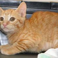 Adopt A Pet :: Constance - Schertz, TX