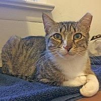 Adopt A Pet :: Elle - East Brunswick, NJ