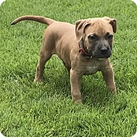 Adopt A Pet :: Camron - Charleston, WV