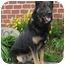 Photo 3 - German Shepherd Dog Mix Dog for adoption in Los Angeles, California - Cassie von Murray