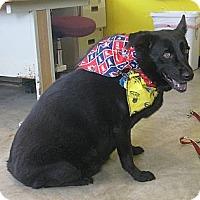 Adopt A Pet :: Raven - Council Bluffs, IA