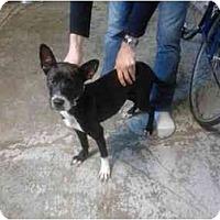 Adopt A Pet :: Yoko - miami beach, FL