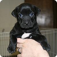 Adopt A Pet :: Ace - DFW, TX